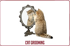 Cat Grooming Services Button