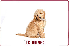 Dog Grooming Services Button